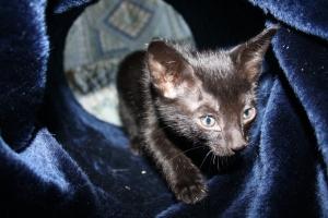 Kittens individ shoot 054